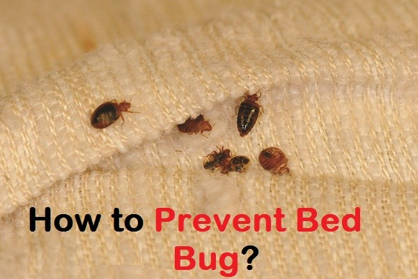 10 Easy Tips To Prevent Bed Bugs Bed Bug Treatment